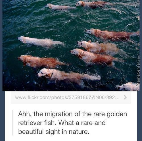 Such Majestic Creatures
