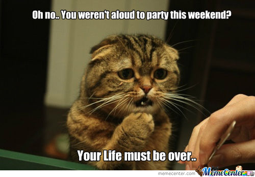 Sympathetic Cat: Partying