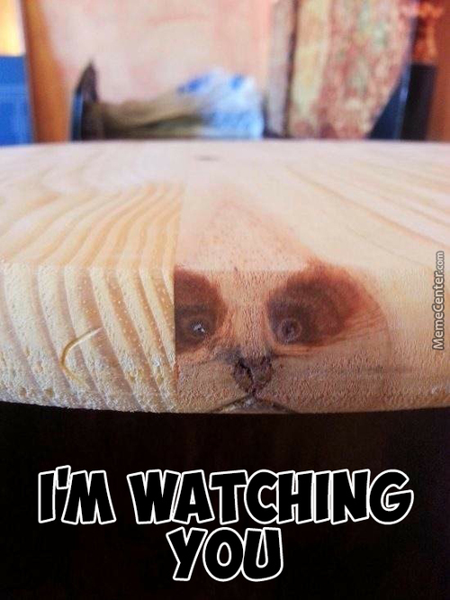 Table Cat/dog/racoon Is Watching You.