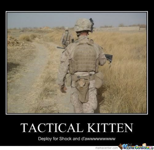 Tactical Kittens