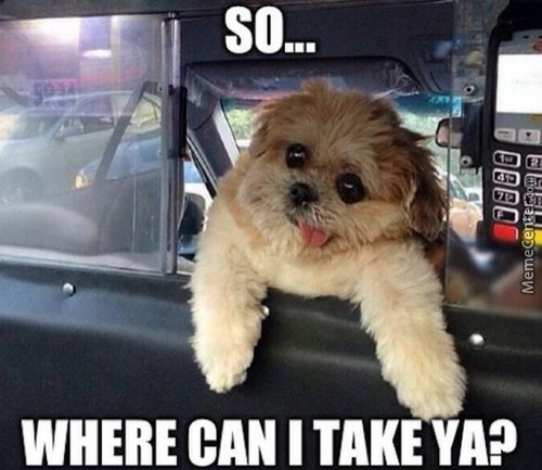 Taxi Driving Dog.  Nuff Said.