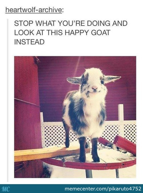 That's One Happy Goat