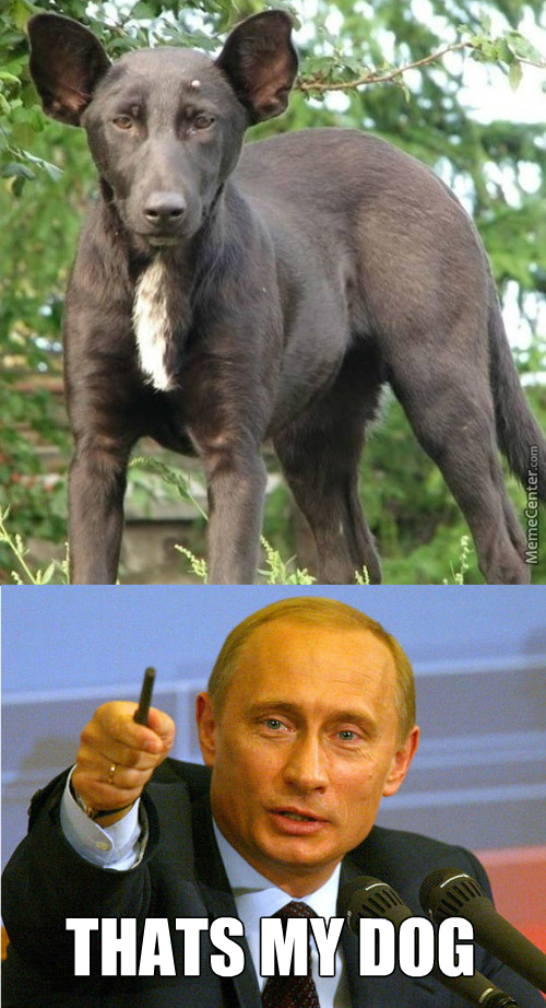 That Dog Totally Looks Like Putin