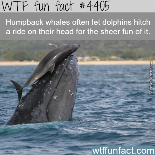 That Dolphin Of Course Have A Whale Of A Time