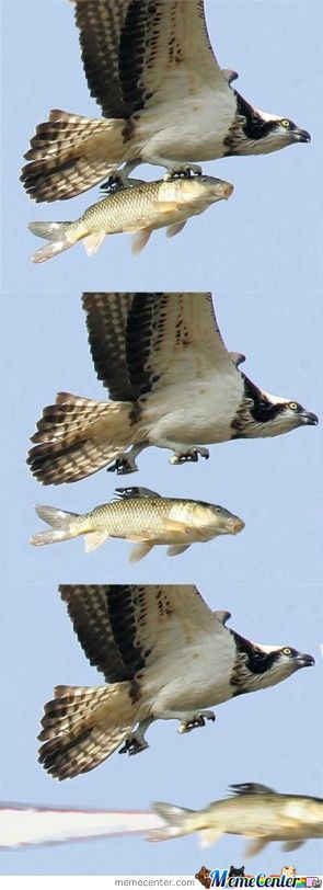 That Eagle Must Be Skrillex, 'cause He Dropped The Bass