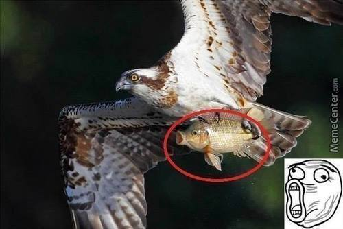 That Fish Isn't Going To Be Eaten, He's Just Taking A Flight