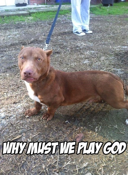 That Is Cute And Wrong At The Same Time Pitbull Head With Dachshund Body