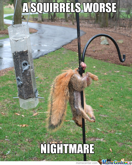 That Poor Squirrel!