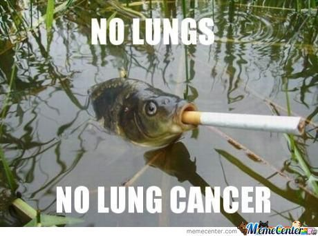 Thats Why Gills Are Better Than Lungs
