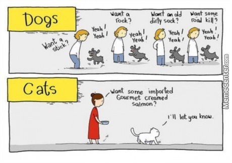 Thats Why I Like Dogs More