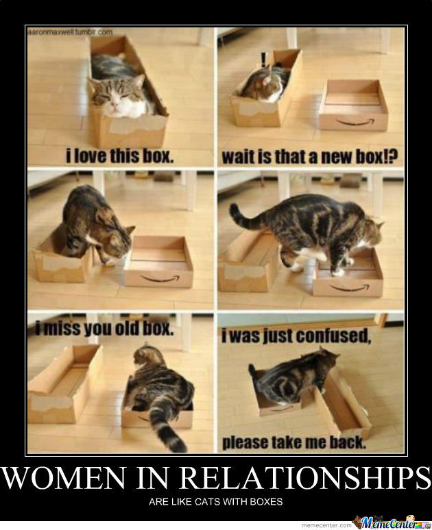 That's Why Women Loves Cats