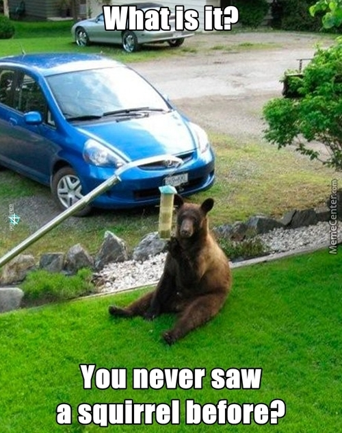 The Bear May Be Mental...