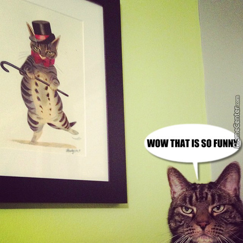 The Cat Is Not Amused