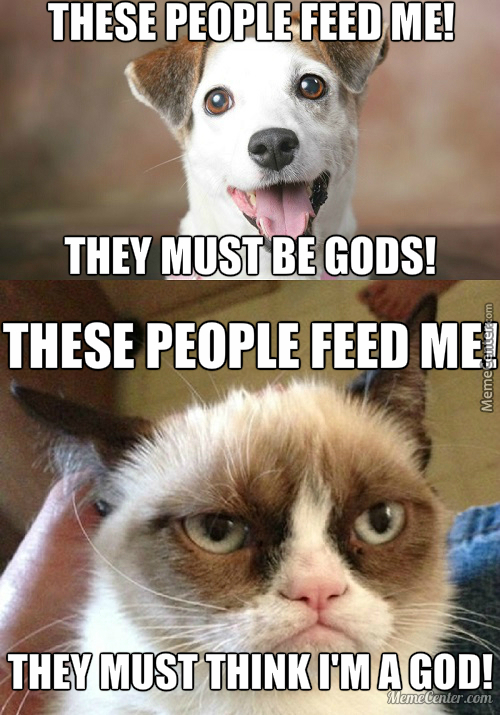 The Difference Between Cats And Dogs By Detergent Meme