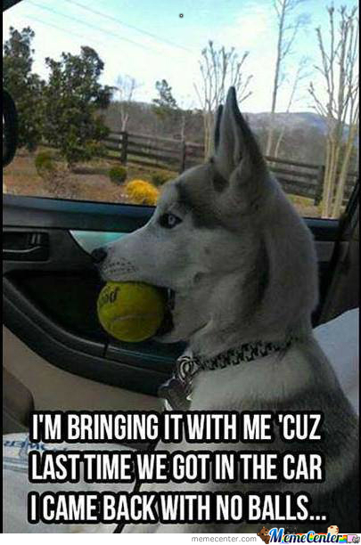 The Dog And His Ball(S)