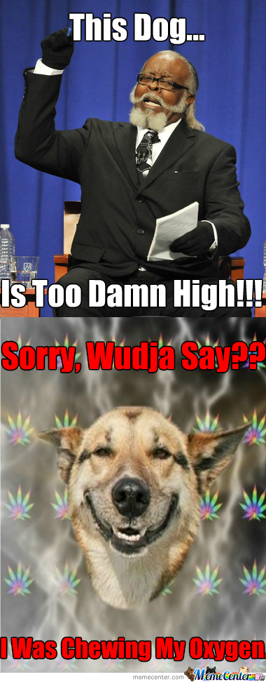 The Dog Is Too Damn High!!