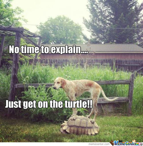 The Great Turtle Escape!!