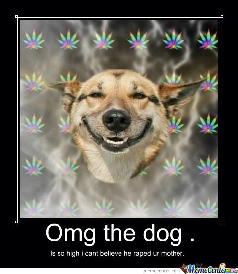 how to get your dog high
