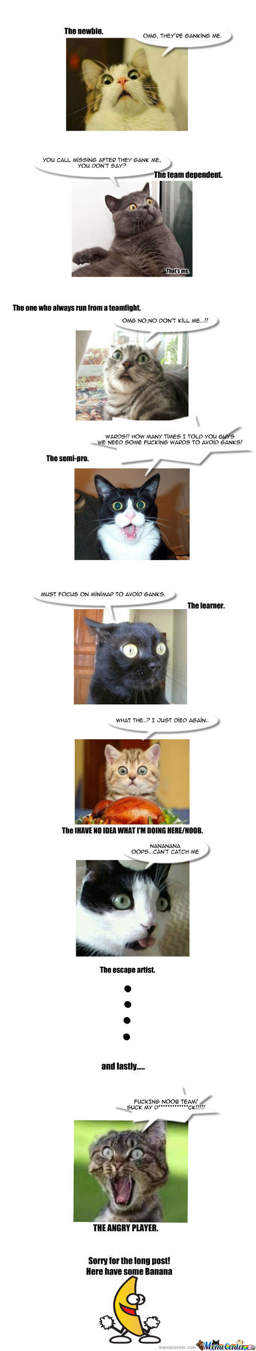 The Internet Cat Reaction When Playing Dota/hon