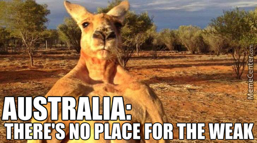 The Kangaroo Is The Only Marsupial That Uses Steroids