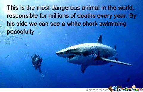 The Most Dangerous Creature