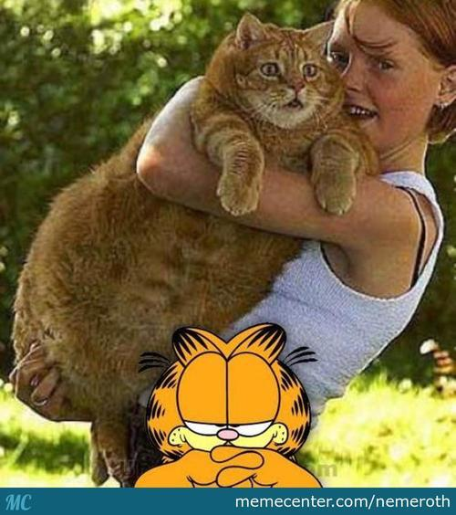 The Real Garfield !