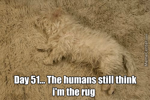 The Rug Has Also Accepted Me As One Of It's Own
