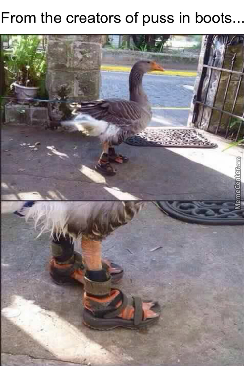 ...the Slipper Ducker