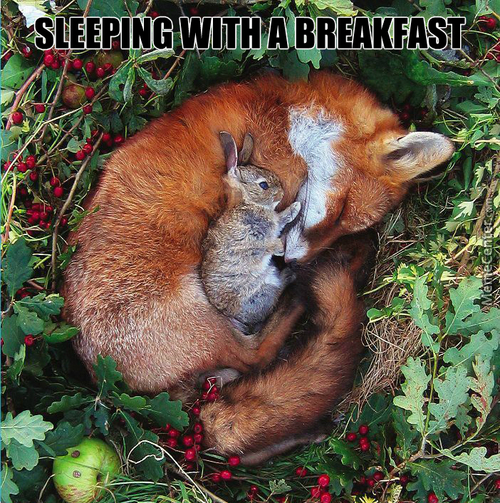 "The True Meaning Of The "" Breakfast In Bed """