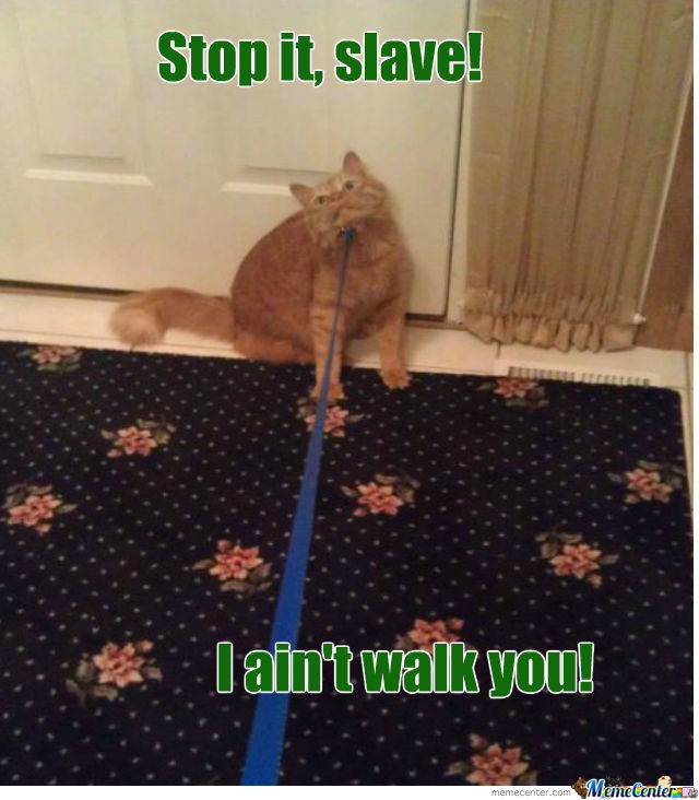 The Walking Cat