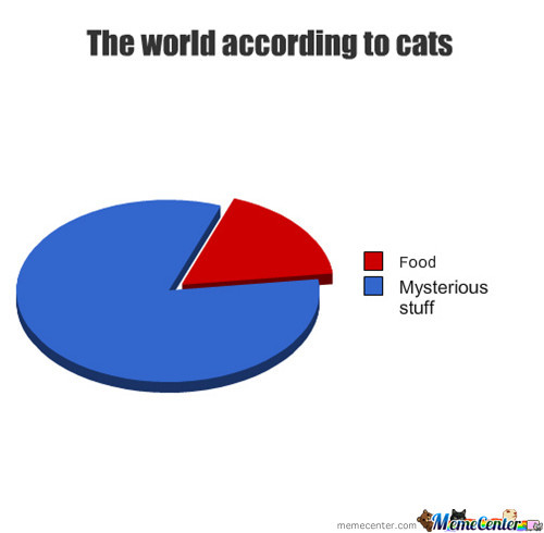 The World According To Cats