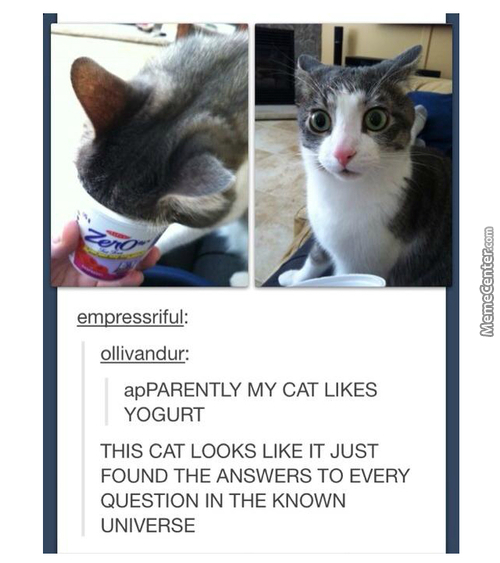 The Yogurt Holds The Answers