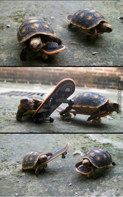 These Turtles Are Better Skaters Than Me