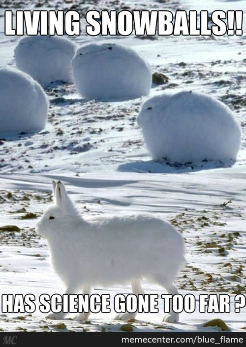 They Are Called Arctic Hares