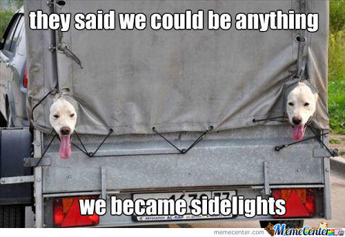 They Bark For Signal