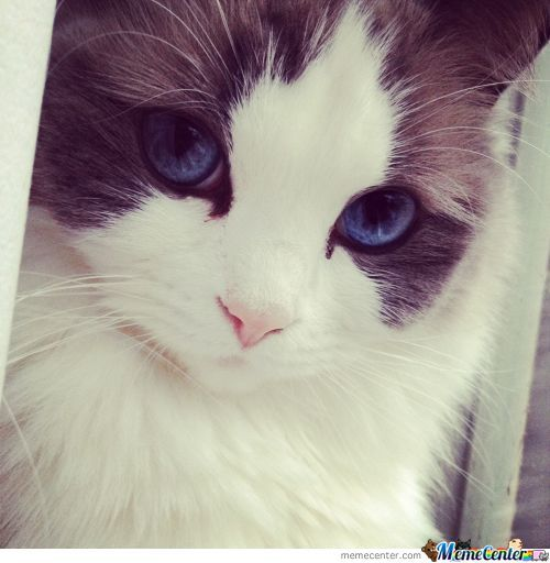 This Cat Is Beautifull