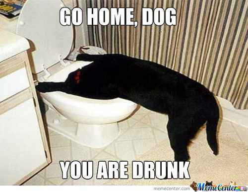 This Dog Is Drunk