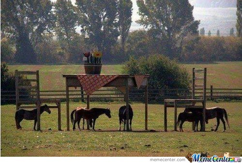 This Farm Owner Was Denied A Council Permit To Build A Horse Shelter. Fortunately, You Don't Need A Permit Build A Table And Chairs.