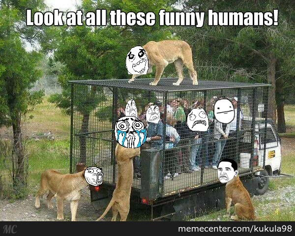 Funny Zoo Meme : This is a zoo ina parallel universe by kukula meme