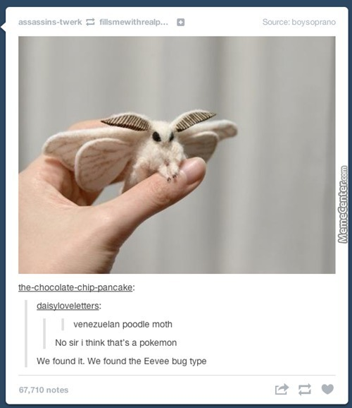 This Is The Cutest Moth I Have Ever Seen, And I Have Seen Cute Moths.