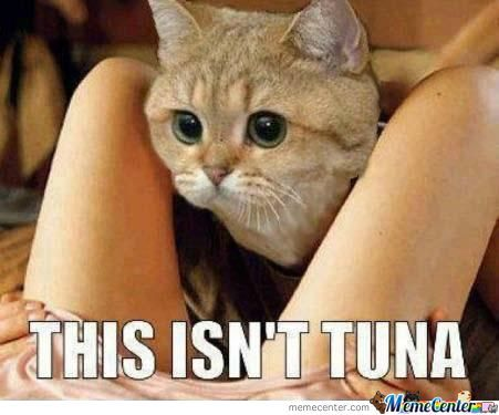 This Isn't Tuna