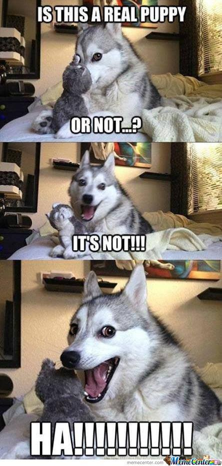 This Joke Is A Little Husky.