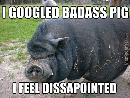 This Pig Is Black And Badass