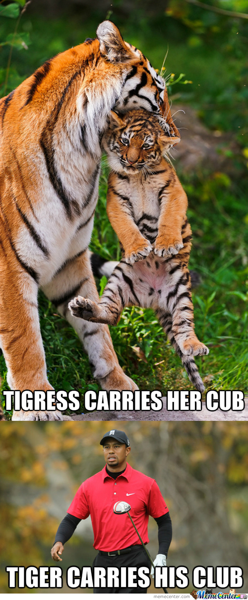 Tiger And Tigress
