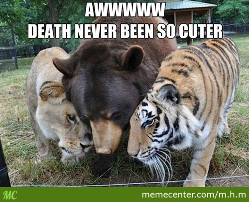 Tiger ,lion And A Bear Hugging