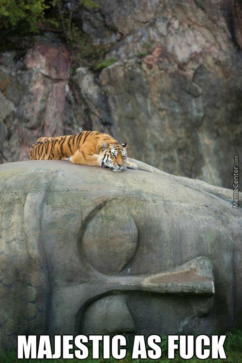 Tiger Rests On Buddha Statue