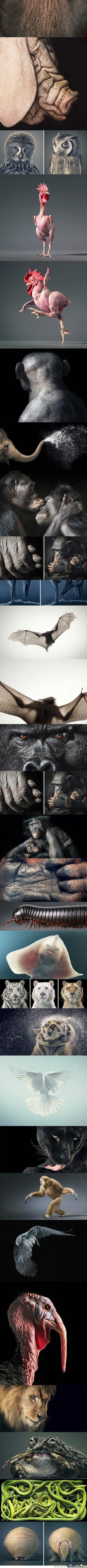 Tim Flach Animal Paintings