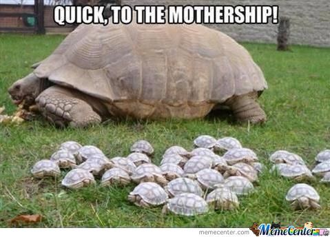 Tortoise Mothership