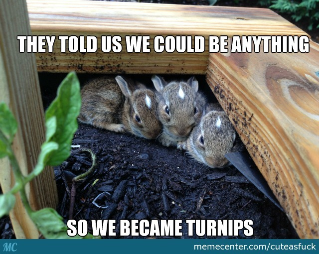 Turnip Bunnies