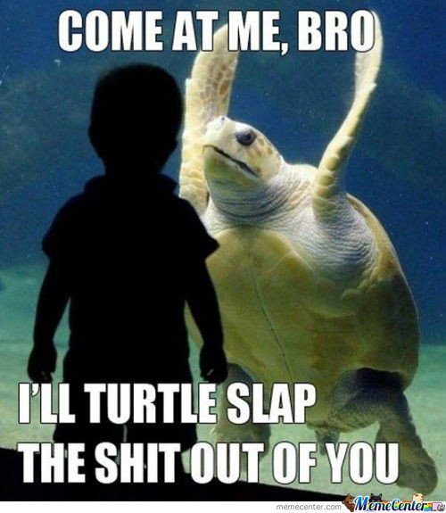 Turtle Bitch